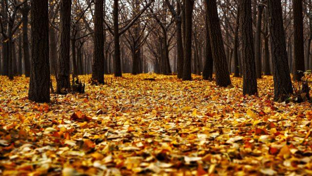 紅葉のスマホでの写真の撮り方|きれいにインスタ映えさせるコツ・設定を紹介